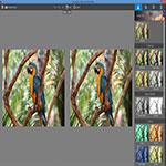 http://img5.downloadha.com/AliRe/95/Screen/InPixio-Photo-Editor-s3.jpg