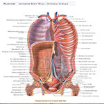 https://img5.downloadha.com/AliRe/Pics/A.D.A.M-Student-Atlas-of-Anatomy-s1.jpg