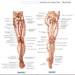 https://img5.downloadha.com/AliRe/Pics/A.D.A.M-Student-Atlas-of-Anatomy-s2.jpg